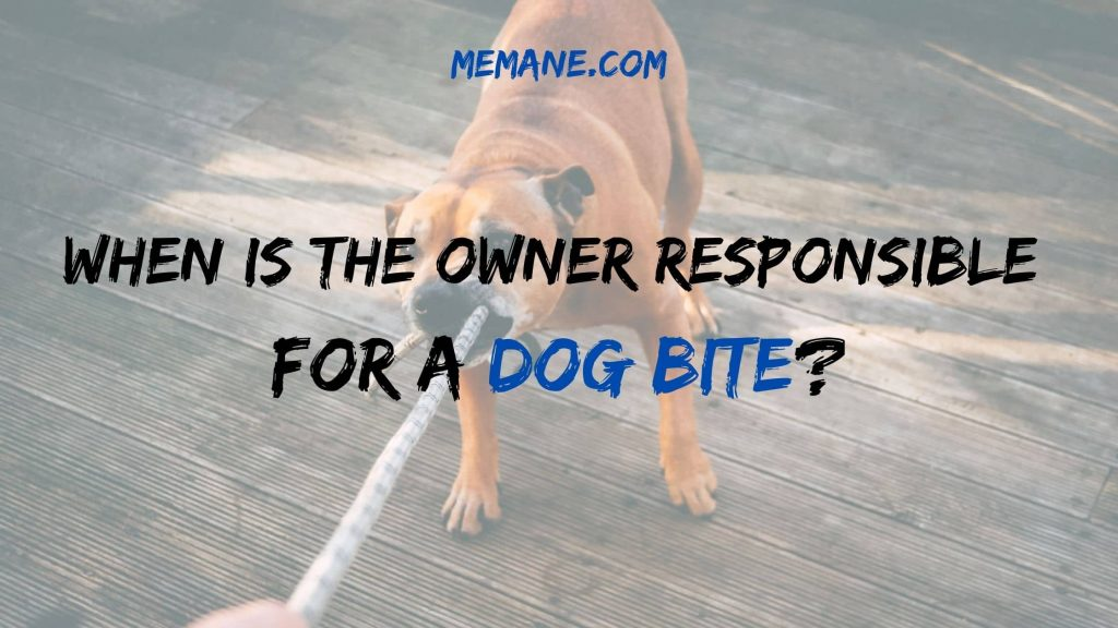 When Is The Owner Responsible For A Dog Bite?